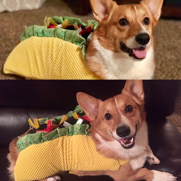 """4. """"Let's Taco 'bout Tricks and Treats"""" by Marcus (Owner: Julie Newsome, Institutional Advancement)"""