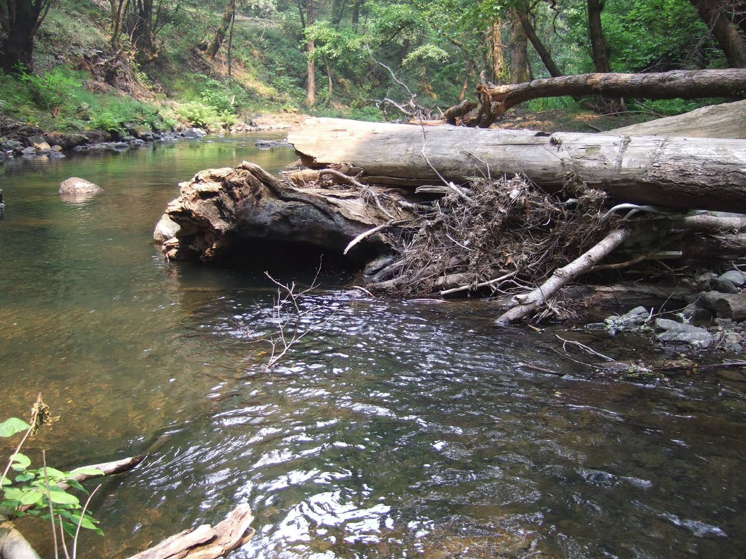 Example log-rootwad revetment for improved fish habitat: