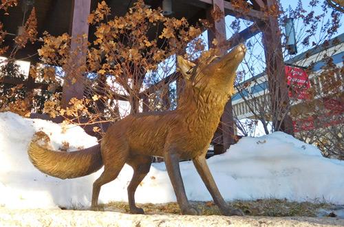 Fox-Photo