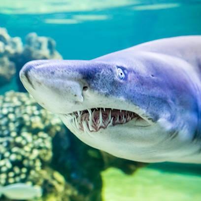 August's Awesome Aquarium Animals Quiz 2018 Survey