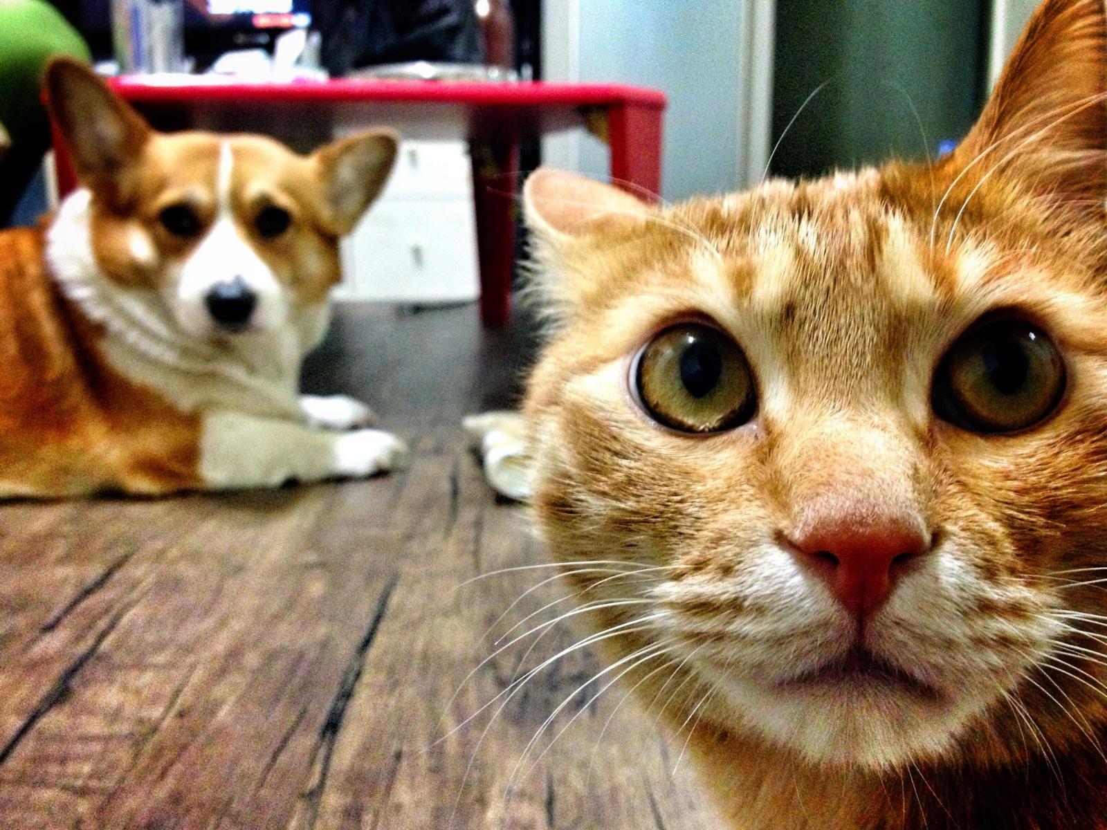 Bello oder Kitty.