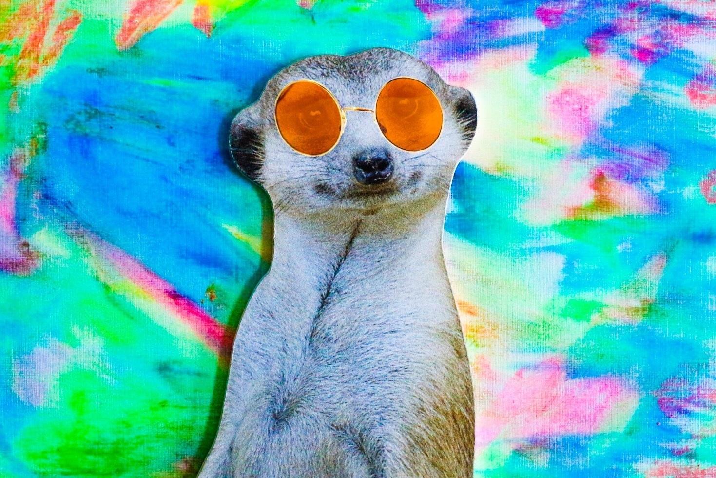 Un suricate, c'est trop mignon.