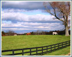 Country with split rail fence