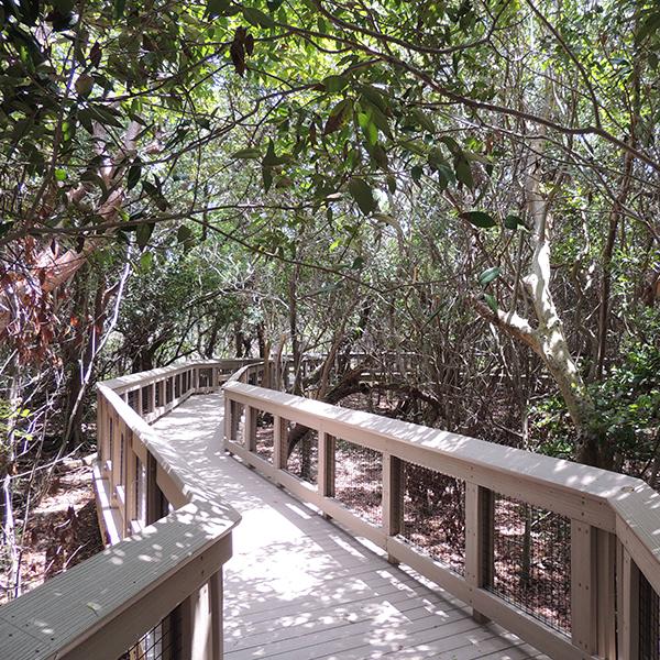 Explore the coastal hardwood hammock at Gumbo Limbo Nature Center.