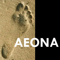 Aeona: Leader Development and Executive Coaching