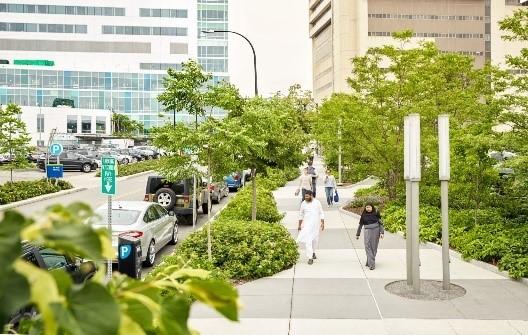 Street trees and buffers
