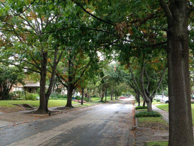 Parkway Trees