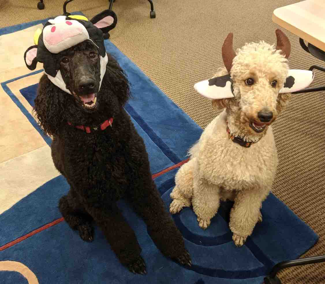 """4. """"First clients for Farm Animal Clinic"""" by Jennifer Johnson (Dean of the Law School)"""