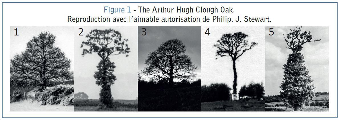 Vous êtes invité à trouver l'ordre chronologique des 5 photos de ce chêne anglais.<br><br>Un indice : une centaine d'années sépare la première de la dernière...