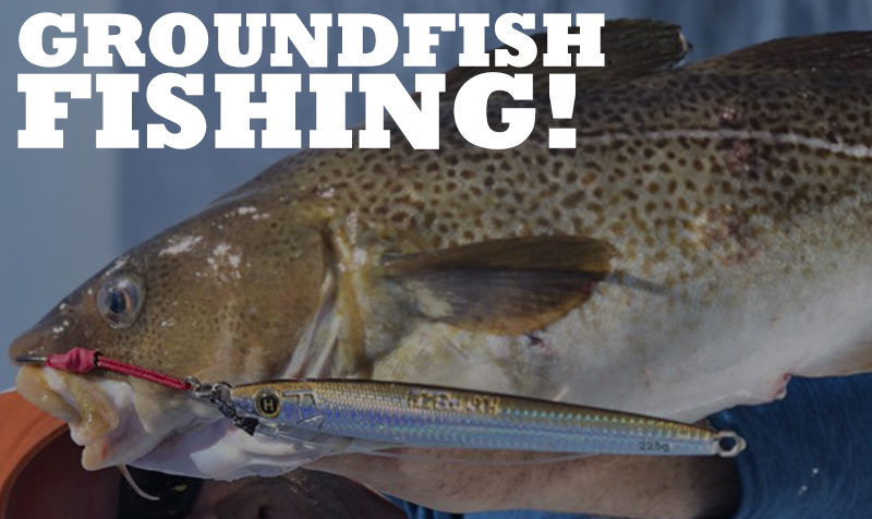 <strong>GROUNDFISH VIDEOS</strong>