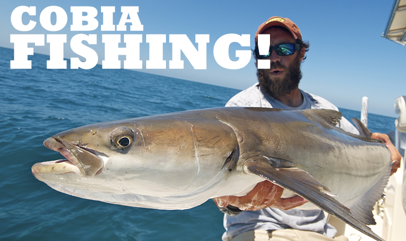 <strong>COBIA VIDEOS</strong>