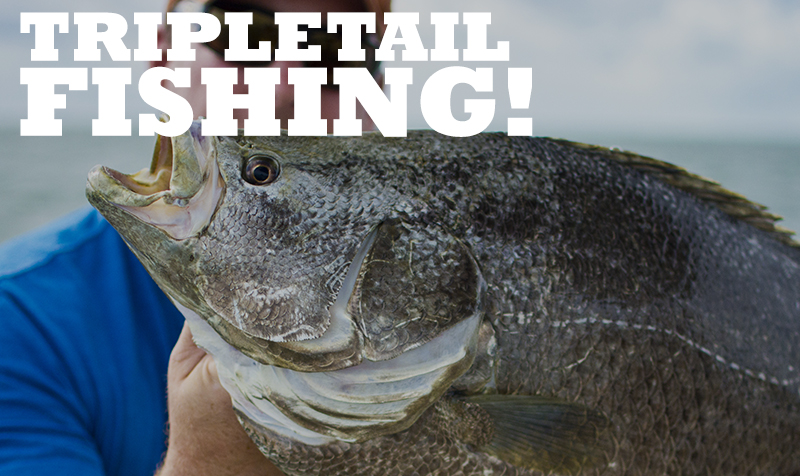 <strong>TRIPLETAIL VIDEOS</strong>