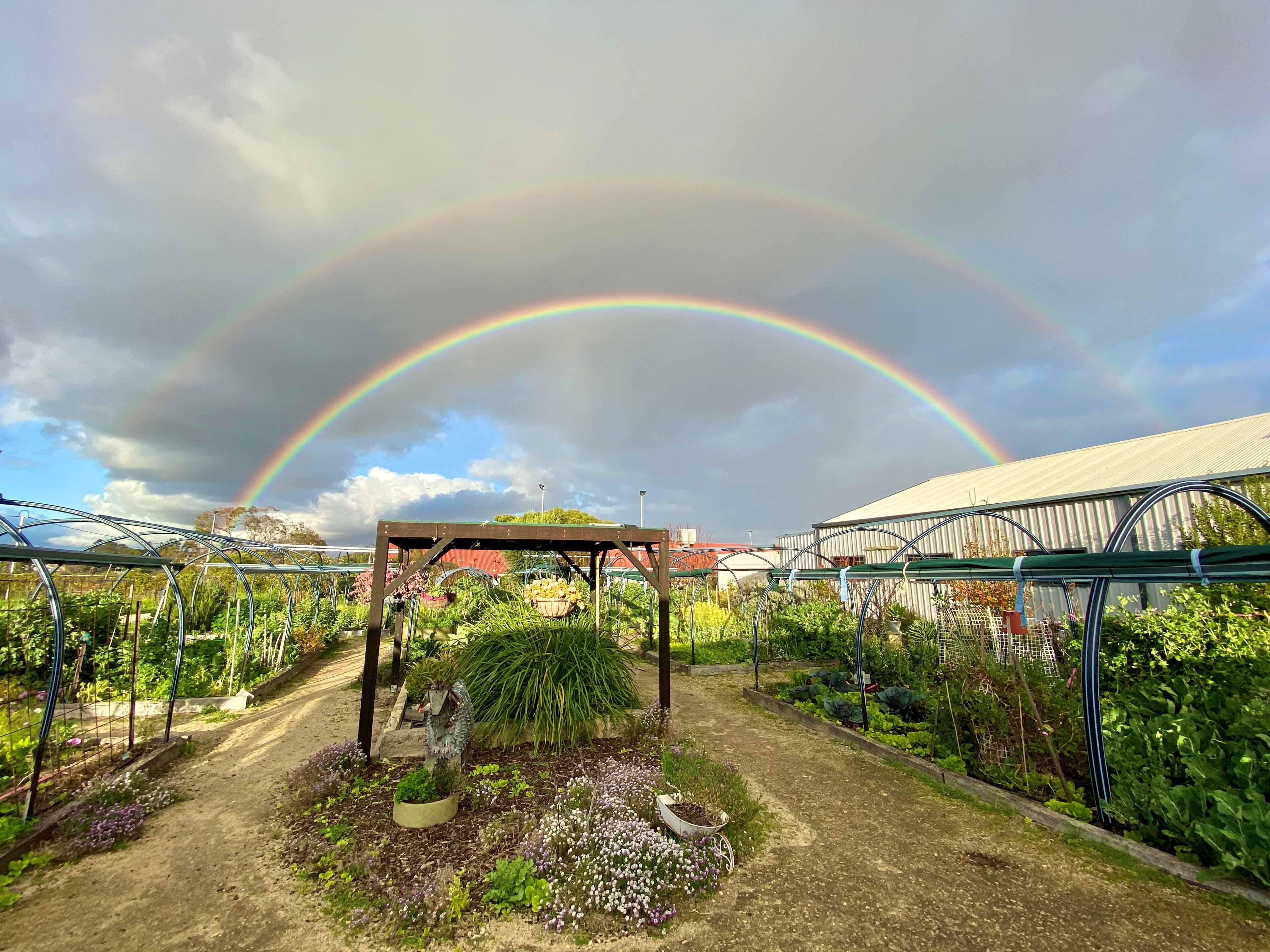 173. N Perth Community Garden 2020