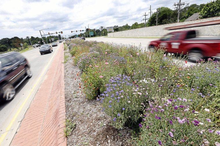 Wildflowers in the medians