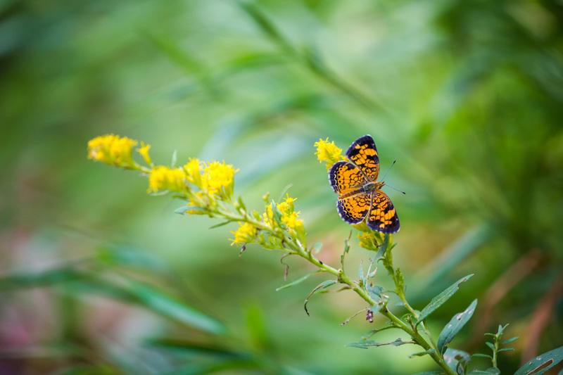 Butterfly/Hummingbird Garden