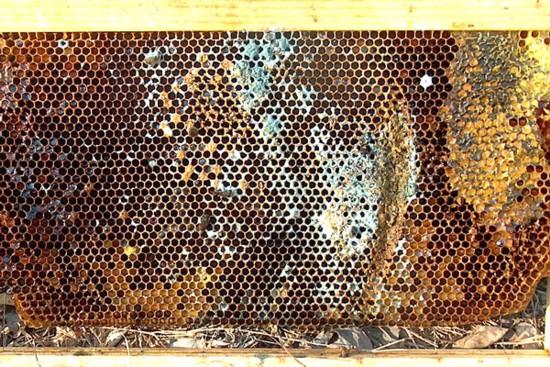 Moldy frame, poor ventilation