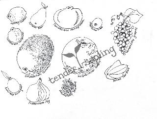 "Virtues Fruits (8.5"" x 11"", black & white)"
